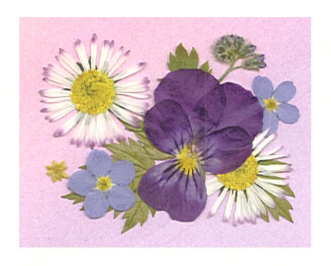Pansy, Forget-Me-Not and Daisy