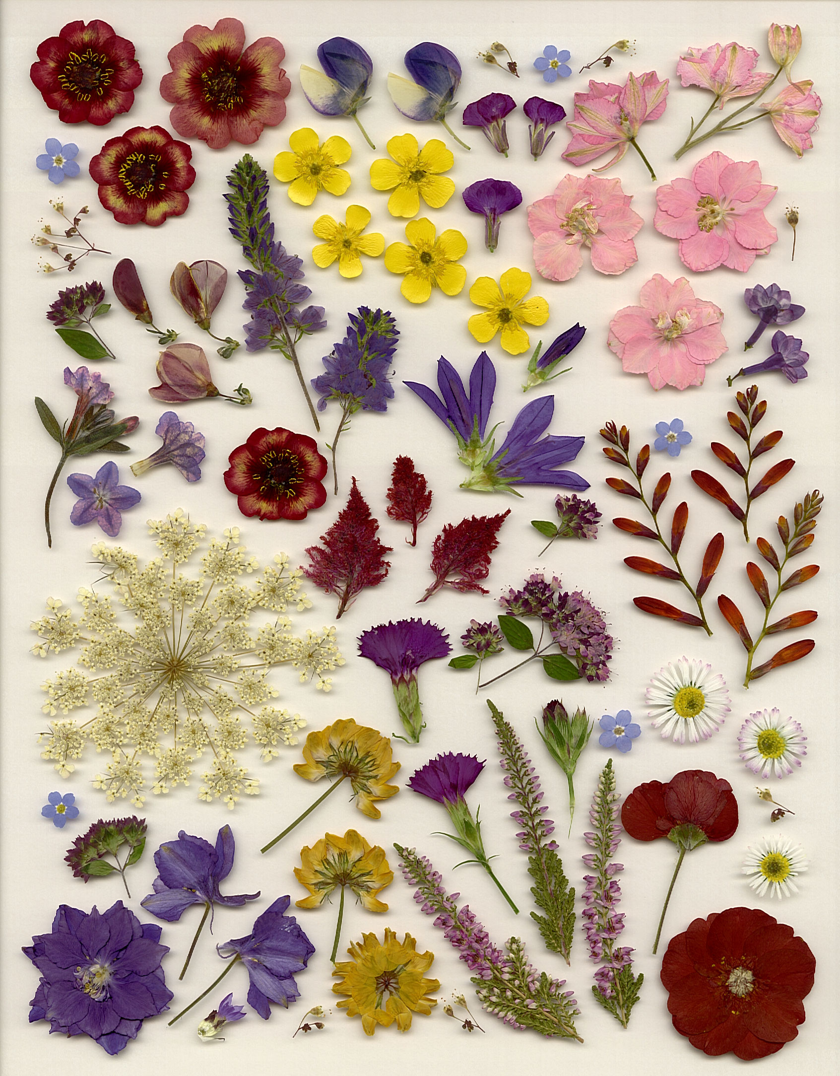 Em 39 s place pressed flower categories for Dried flowers for crafts