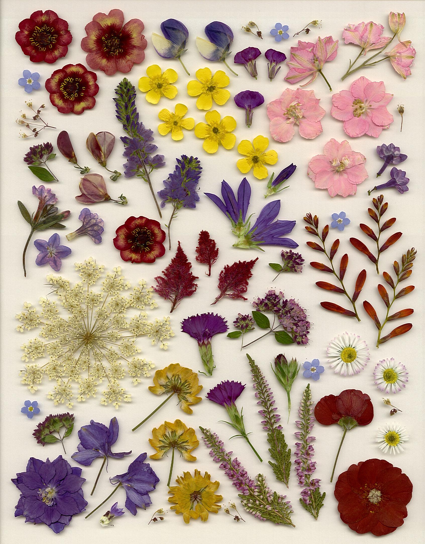 Em's Place Pressed Flower Categories