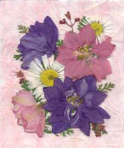 Larkspur, Daisy, Coral Bells
