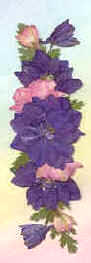 Blue and Pink Larkspur