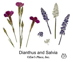 DIY Digital Dianthus and Salvia Pressed Flowers