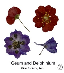 DIY Digital Geum and Delphinium Pressed Flowers