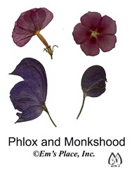 DIY Digital Phlox and Monkshood Pressed Flowers