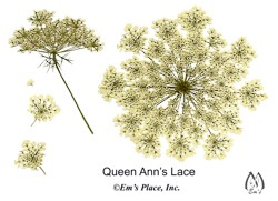 DIY Digital Queen Anns Lace Pressed Flowers