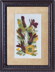 Real Pressed Cardinal Flowers in 5x7 Inch Rectangle Frame - pic-5x7-2