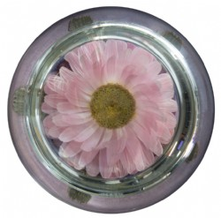 Glass Paperweight with Real Dried Acroclinium Flower