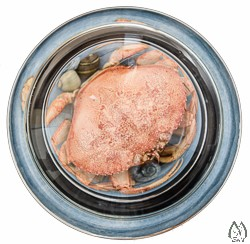 Glass Paperweight with Real Dungeness Crab Shell