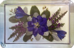 Glass Paperweight with Pressed Blue Larkspur Flower
