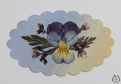 Real Pressed Flower Sticker or DIY Design Element - st-1
