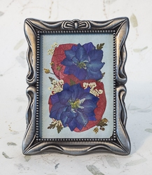 Real Pressed Blue Larkspur in Pewter Tone Rectangular Frame